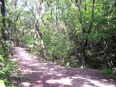 森の散策路の写真